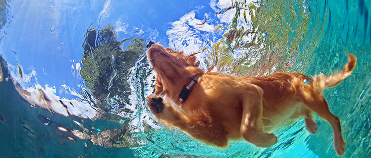 Keeping Pets Cool During Summer