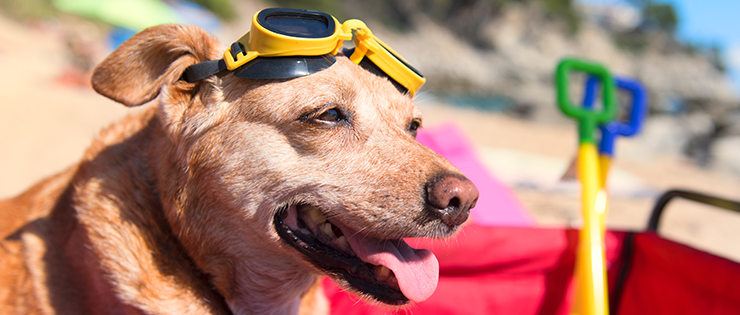 Sun Protection For Pets