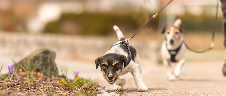 How to Stop Your Dog Pulling on a Lead