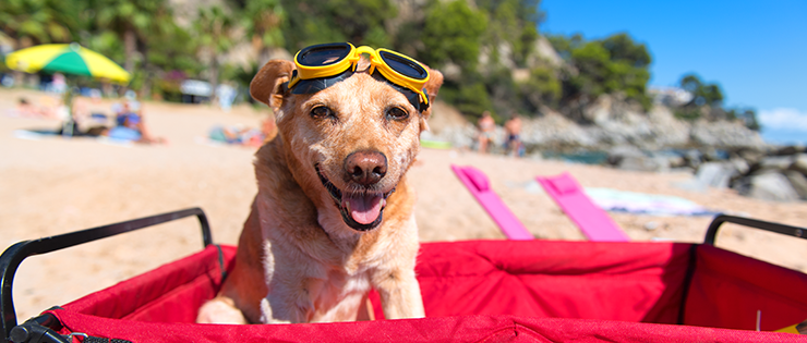 Sunscreen for Pets