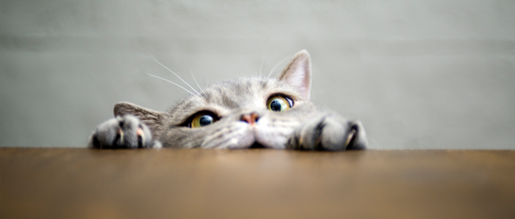 Why Does My Cat Do That? – Common Questions and Answers on Cat Behaviour