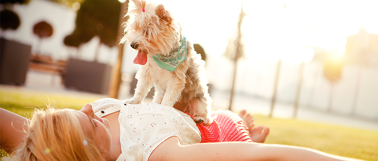 Keeping your Pet safe in Summer