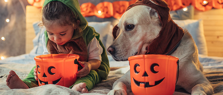 Halloween and Keeping Your Pet Safe