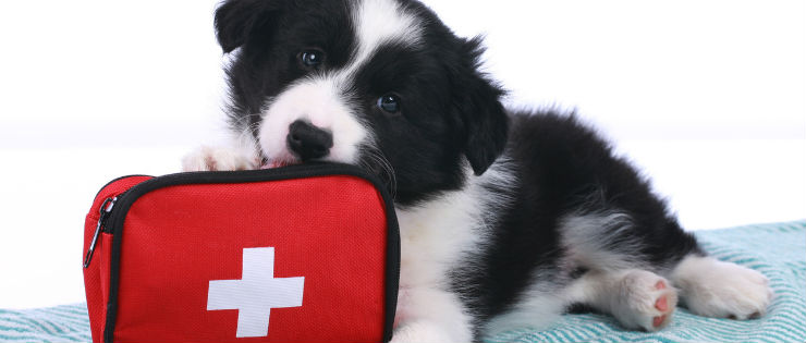 How to be Prepared In Case of a Pet Emergency