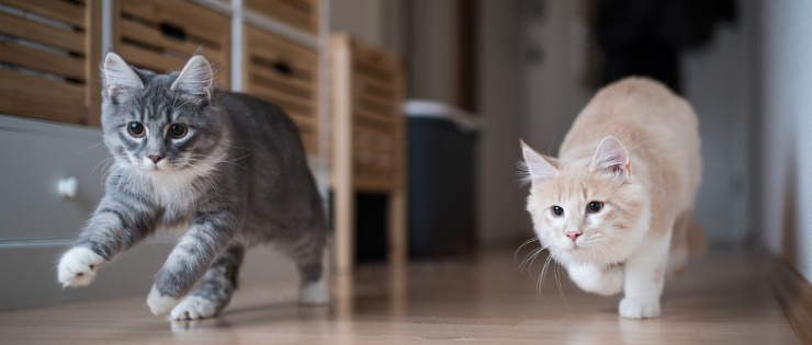 A new kitten and cat enjoying play time