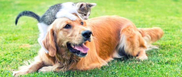 Introducing a Kitten to A Dog - How to Guide