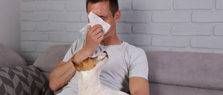 man sick with the flu blowing his nose on the couch, dog sitting on owners lap looking up at him