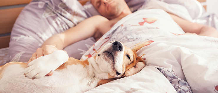 Should Your Pets Sleep On Your Bed?