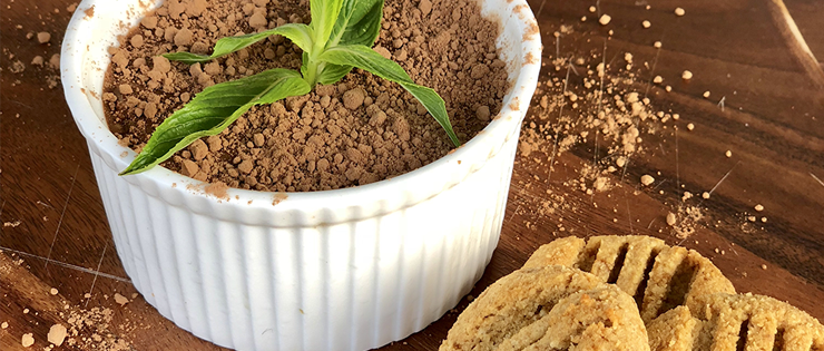 Mint Cacao Mousse with Ginger Snaps