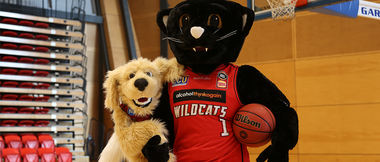 Perth Wildcats Stay Healthy With HIF